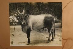 OI0A3529