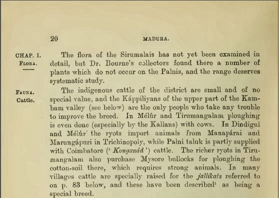 Konganad cattle: Madurai District Gazetteer (1906)